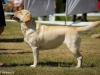 2013-08-04-lithuanian-retriever-club-show-w13img_5763