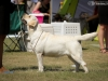 2013-08-04-lithuanian-retriever-club-show-w13img_5771