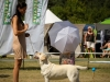 2013-08-04-lithuanian-retriever-club-show-w13img_5778