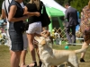 2013-08-04-lithuanian-retriever-club-show-w13img_5782