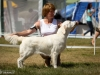 2013-08-04-lithuanian-retriever-club-show-w13img_5799