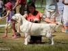 2013-08-04-lithuanian-retriever-club-show-w13img_5806