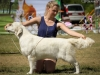 2013-08-04-lithuanian-retriever-club-show-w13img_5818