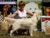 2013-08-04-lithuanian-retriever-club-show-w13img_5838