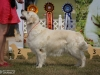 2013-08-04-lithuanian-retriever-club-show-w13img_5852