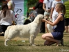 2013-08-04-lithuanian-retriever-club-show-w13img_5904