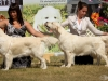 2013-08-04-lithuanian-retriever-club-show-w13img_5922