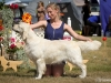 2013-08-04-lithuanian-retriever-club-show-w13img_5928