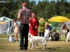 2013-08-04-lithuanian-retriever-club-show-w13img_5943