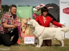 2013-08-04-lithuanian-retriever-club-show-w13img_5967