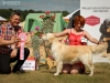 2013-08-04-lithuanian-retriever-club-show-w13img_5996