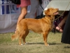 2013-08-04-lithuanian-retriever-club-show-w13img_6017
