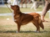 2013-08-04-lithuanian-retriever-club-show-w13img_6023