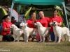 2013-08-04-lithuanian-retriever-club-show-w13img_6095