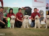2013-08-04-lithuanian-retriever-club-show-w13img_6108