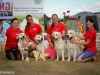 2013-08-04-lithuanian-retriever-club-show-w13img_6128