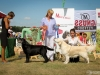 2013-08-04-lithuanian-retriever-club-show-w13img_6217