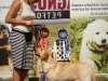 2013-08-04-lithuanian-retriever-club-show-w13img_6235