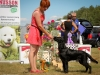 2013-08-04-lithuanian-retriever-club-show-w13img_6238