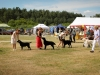 2013-08-04-lithuanian-retriever-club-show-w13img_6255