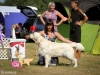2013-08-04-lithuanian-retriever-club-show-w13img_6278