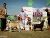 2013-08-04-lithuanian-retriever-club-show-w13img_6336