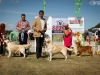 2013-08-04-lithuanian-retriever-club-show-w13img_6358